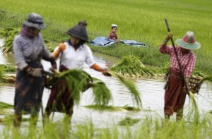 A boy sits near paddy field while his parents  plant rice seedlings in a paddy field on the outskirts of Yangon