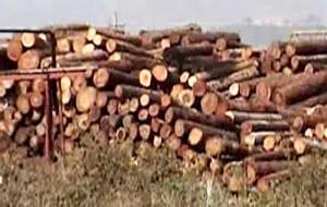 Timber copy