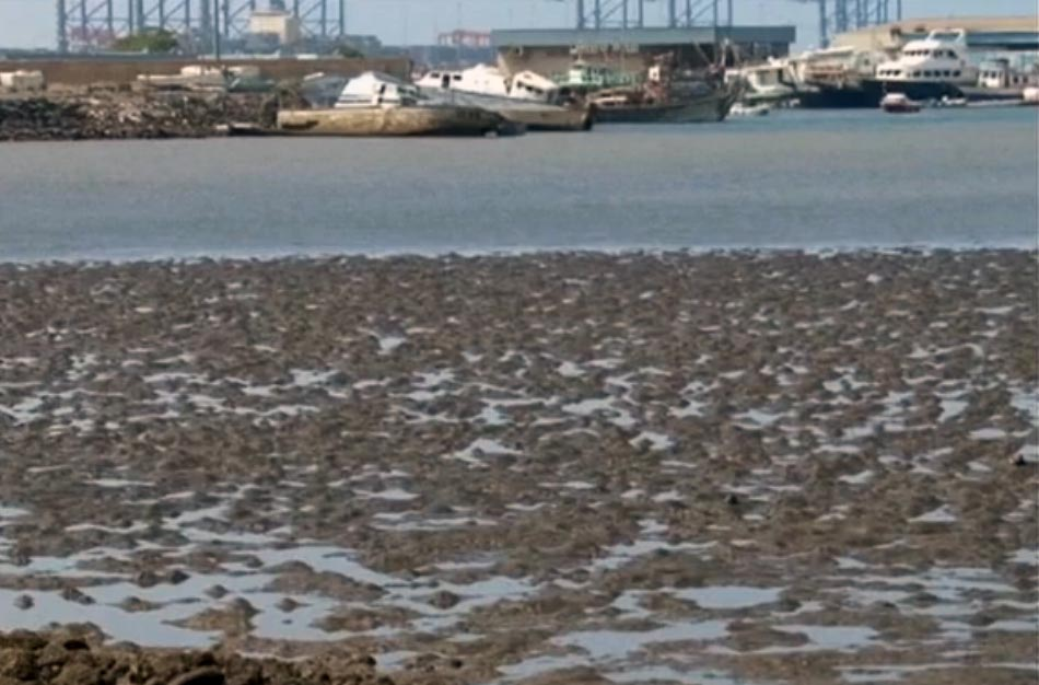 Djibouti's environment still suffering 20 years after oil leakage