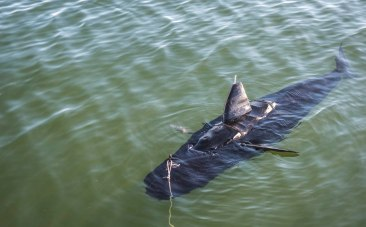 navy-unveils-ghost-swimmer-robot-fish