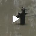 Northern India flood