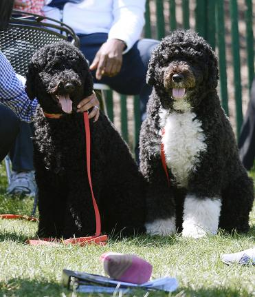 1 First-dogs-of-the-White-House