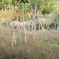 wild-elephants-damage-houses02-thaipbs