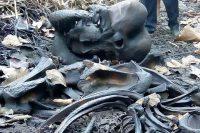 elephant-died01-May-Thwel