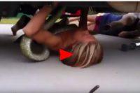 Fearless 14-year-old 'mini Steve Irwin' wrestles 6ft-python from bodywork of family truck