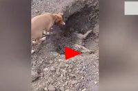 Heartbreaking footage shows dog