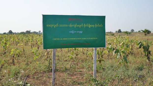 Chemical-Free Conservation Agriculture Plot 1