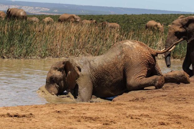 Elephant dive into water02-CATERS NEWS AGENCY