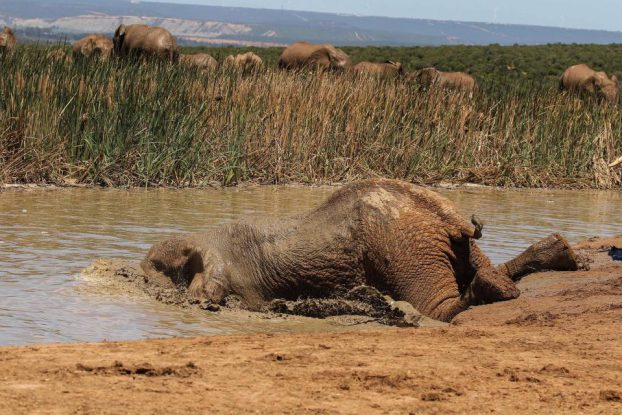 Elephant dive into water03-CATERS NEWS AGENCY