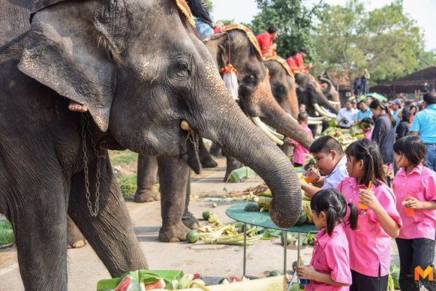 Thai elephant news02-mthai