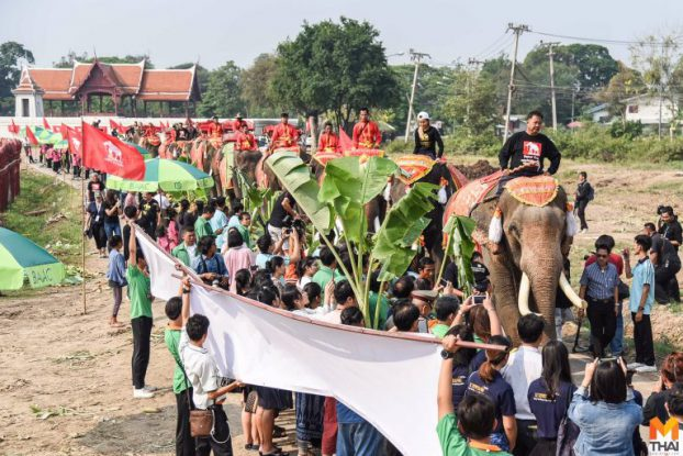 Thai elephant news03-mthai