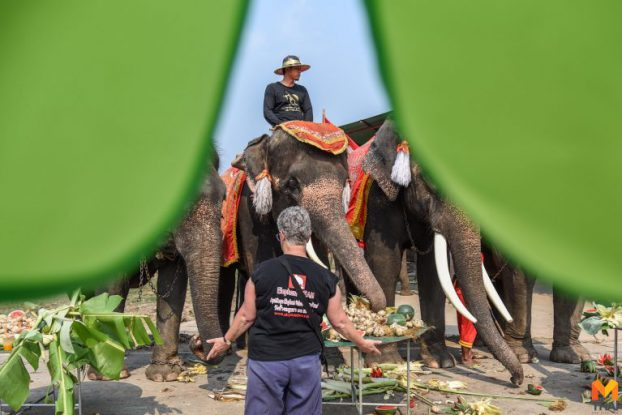 Thai elephant news07-mthai